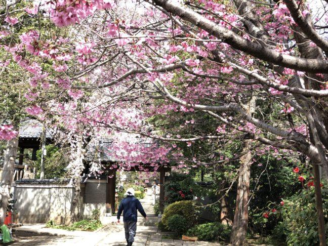 【西ヶ原駅】ってどんな街?北区西ヶ原の旧古川庭園