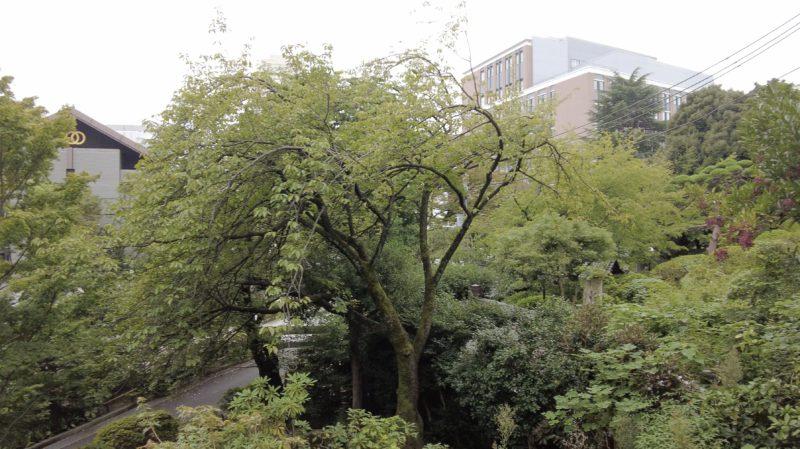 護国寺の音羽富士